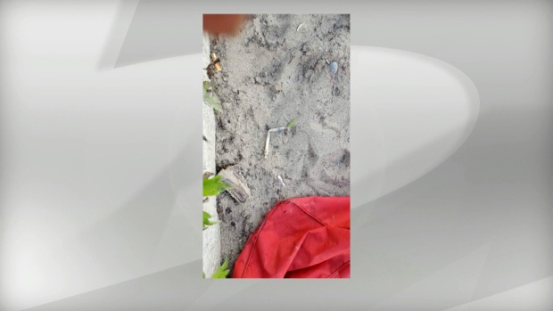 A syringe found at Sunnyside Park is seen in an undated image. (CP24)