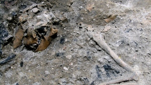 This photo made available Monday, June 26, 2017, by the Italian Culture Ministry, shows part of the 1,800-year-old skeleton of a dog, which apparently perished in a blaze in Rome.  (Italian Culture Ministry Via AP)