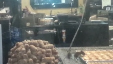 Mice in baklava store