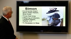 In this May 8, 2017 file photo, attorney Guy Cook speaks a news conference while looking at a photo of Simon, a giant rabbit that died after flying from the United Kingdom to Chicago, in Des Moines, Iowa. A group of Iowa businessmen have filed a lawsuit against United Airlines over the death of Simon. The businessmen filed the lawsuit Wednesday, July 26, 2017, more than three months after airline workers found the continental rabbit named Simon dead. (AP Photo/Charlie Neibergall)