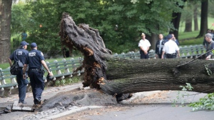 New York City Police officers walk past the base of an overturned fallen tree, Tuesday, Aug. 15, 2017, in New York's Central Park. The Fire Department of New York says an adult and three children have been taken to a hospital in serious condition after the tree fell in Central Park.(AP Photo/Mary Altaffer)