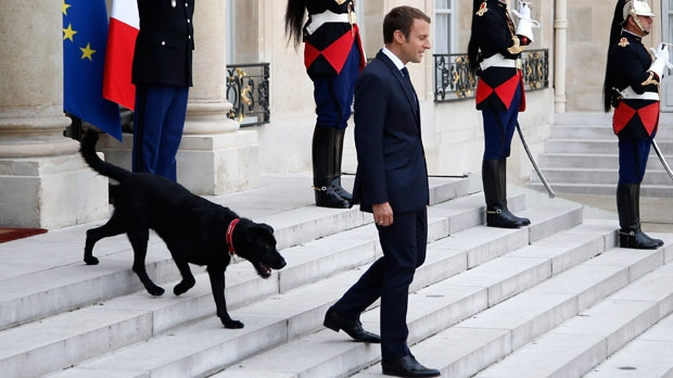 first dog, french president