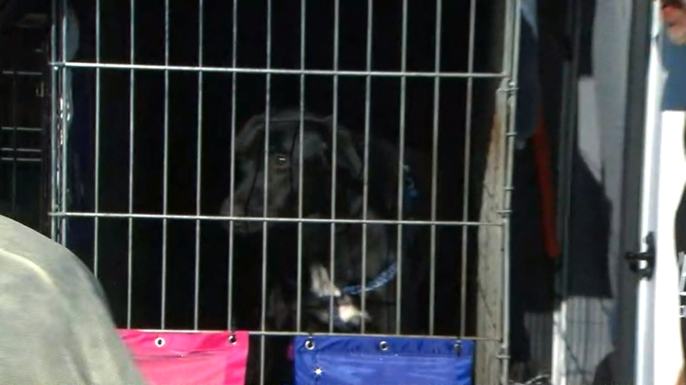 Rescue dogs displaced by Hurricane Harvey arrive in Toronto.