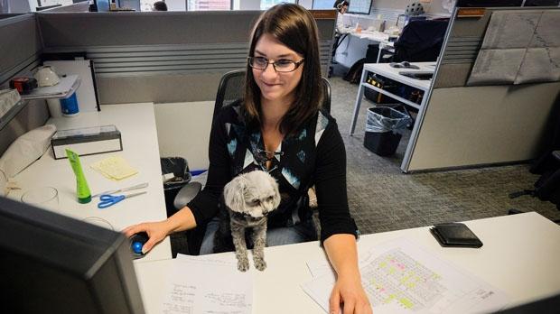 dog, desk, calgary