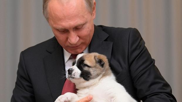 puppy, Putin