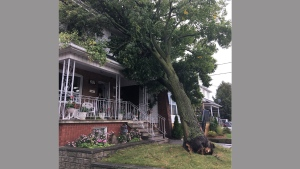 A fallen tree is pictured on a home on Glenholme Avenue following high winds Sunday October 15, 2017.  (@TrusteeDAmico /Twitter)