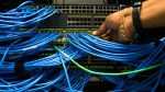 Networking cables and circuit boards are shown in Toronto on Wednesday, November 8, 2017. THE CANADIAN PRESS/Nathan Denette