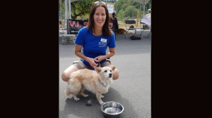 the dog is shown with a BCSPCA volunteer in a handout photo. The owner of a dog who nearly died from a massive flea infestation earlier this year, has been charged with one count of animal cruelty under the Prevention of Cruelty to Animals Act. THE CANADIAN PRESS/HO-BCSPCA MANDATORY CREDIT