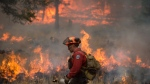 B.C. Wildfire Service firefighter Max Arcand uses a torch to ignite dry brush during a controlled burn to help prevent the Finlay Creek wildfire from spreading near Peachland, B.C., on Thursday September 7, 2017. THE CANADIAN PRESS/Darryl Dyck