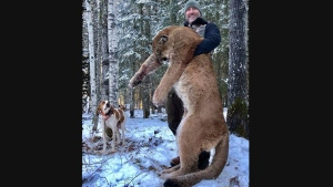"Canadian TV host Steve Ecklund holds a cougar in a photo from his Facebook page. A Canadian TV personality is taking heat online after he killed a cougar in northern Alberta. Steve Ecklund, who's the host of outdoor show ""The Edge,"" bragged about hunting a huge cougar earlier this month. THE CANADIAN PRESS/HO-Facebook-Steve Ecklund"