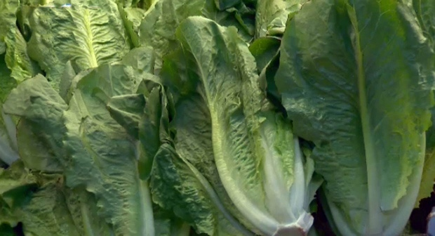 Coli risk for romaine lettuce returns to low