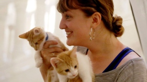 Laura Dorle of St. Paul was among the lucky one who got to hold some of the kittens Tuesday, June 27, 2017, for Minneapolis Kitty Hall in the Minneapolis City Hall rotunda in Minneapolis, Minn. (David Joles/Star Tribune via AP)