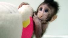 Monkey clone