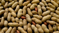 This Feb. 20, 2015 file photo, photo shows an arrangement of peanuts in New York. (AP Photo/Patrick Sison, File)