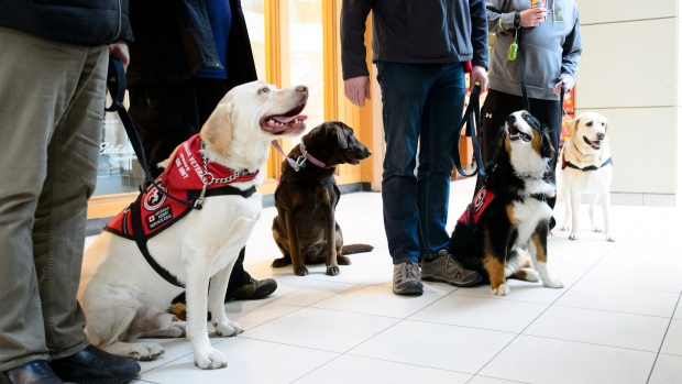 Images For Service Dogs For Veterans Canada
