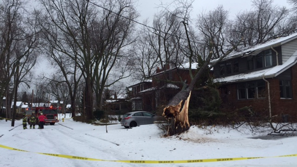 A fallen tree rests atop a house during an ice storm Sunday April 15, 2018. (Courtney Heels /CP24)