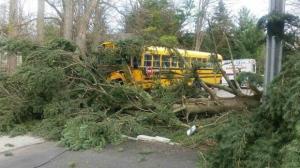 Tree bus