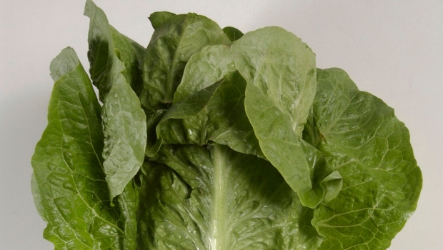 CDC: E. coli outbreak from romaine lettuce continues to spread