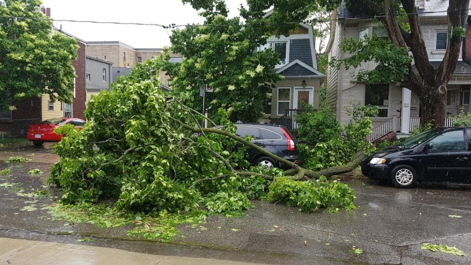 A fallen tree is pictured in the area of  Broadview and Danforth avenues after a spring storm Wednesday, June 13, 2018. (@dkrussell61 /Twitter)