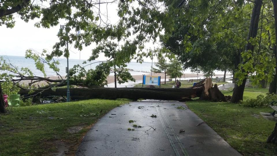 A fallen tree lies across the boardwalk in the Beaches after a spring storm Wednesday, June 13, 2018. (@millerdk03 /Twitter)