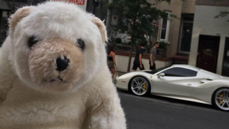 'Ossington Bear' spots a Ferrari Monday July 2, 2018. (Rhonda Riche)