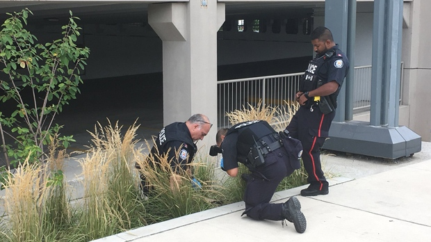 Officers appear to located a baseball cap in some bushes near Yorkdale Mall on Aug. 30, 2018. (Christie Bezaire/CP24)