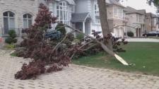 tree storm
