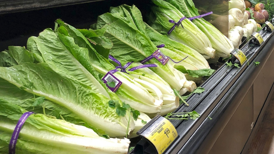 Health officials in the U.S. and Canada told people Tuesday to stop eating romaine lettuce because of a new E. coli outbreak. (AP Photo/Mark J. Terrill)