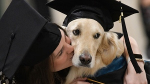 """""""Griffin"""" Hawley, the Golden Retriever service dog, is given a congratulations hug by his owner Brittany Hawley after being presented an honorary diploma by Clarkson, during the Clarkson University """"December Recognition Ceremony"""" in Potsdam, N.Y., Saturday Dec. 15, 2018. Griffin's owner, Brittany Hawley, also received a graduate degree in Occupational Therapy. Both attended 100% of their classes together. ( AP Photo/Steve Jacobs)"""