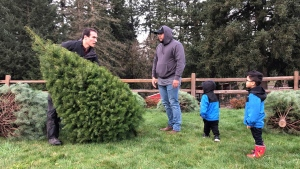 In this Thursday, Nov. 29, 2018, photo, Tommy Lee, a sixth-generation tree farmer at Lee Farms in Tualatin, Ore., helps Jason Jimenez and his sons carry the Douglas fir they selected off the tree lot. (AP Photo/Gillian Flaccus)