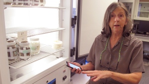 In a Tuesday, Oct. 30, 2018 photo, Ohio State University entomologist Susan Jones discusses the app she created with tips on spotting bed bugs and getting rid of them as she shows off a cooler with containers of bed bugs, in Columbus, Ohio. Jones says the bugs can be tricky to identify because they're nocturnal and good at hiding. (AP Photo/Andrew Welsh-Huggins)