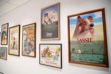 dog museum
