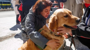 Marian Iravani hugs Buddy the golden retriever therapy dog from St. John's Ambulance at Mel Lastman Square in Toronto on Thursday, April 26, 2018. THE CANADIAN PRESS/Cole Burston