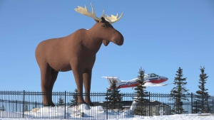 Mac the Moose, pictured in Moose Jaw, Sask., on Tuesday, Feb. 25, 2019, is competing with another moose statue in Stor-Elvdal, Norway, over which hooved ungulate stands higher. THE CANADIAN PRESS/Mark Taylor