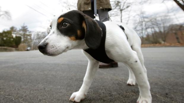 Risky dog walking