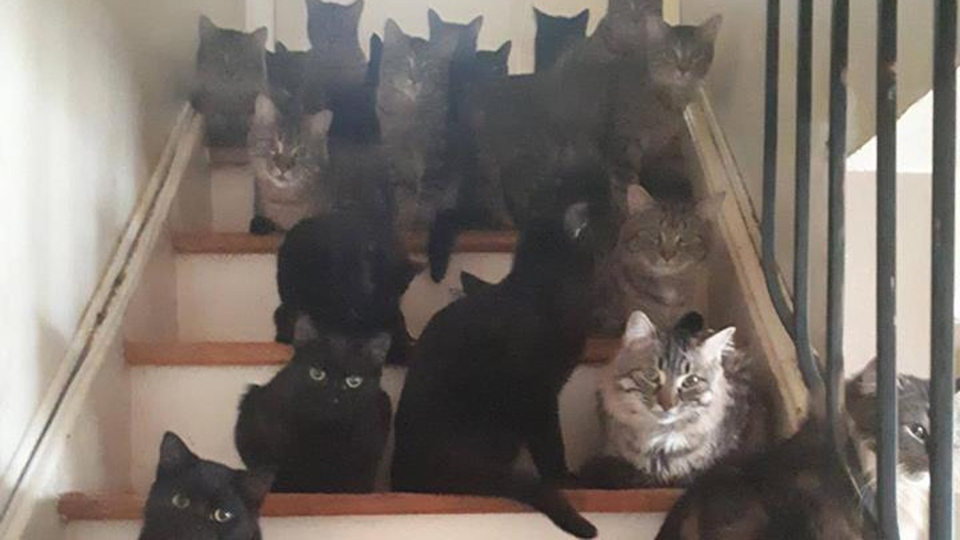 Cats are pictured at a Toronto home where more than 105 cats were found by animal services. (TorontoCatRescue /Facebook)