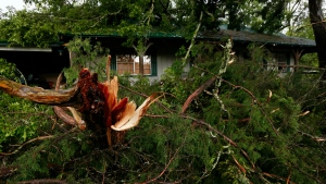 Ripped tree branches litter a Learned, Miss., home, following severe weather that hit the small community, Thursday, April 18, 2019. Several homes were damaged by fallen trees in the tree lined community. Strong storms again roared across the South on Thursday, topping trees and leaving more than 100,000 people without power across Mississippi, Louisiana and Texas. (AP Photo/Rogelio V. Solis)