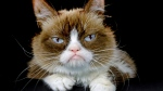 This Dec. 1, 2015 file photo shows Grumpy Cat posing for a photo in Los Angeles. Grumpy Cat, whose sour puss became an internet sensation, has died at age 7, according to her owners. Posting on social media Friday, May 17, 2019, her owners wrote Grumpy experienced complications from a urinary tract infection and 'passed away peacefully' in the arms of her mother on Tuesday, May 14. (AP Photo/Richard Vogel, File)