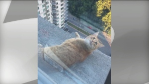 highrise walking cat
