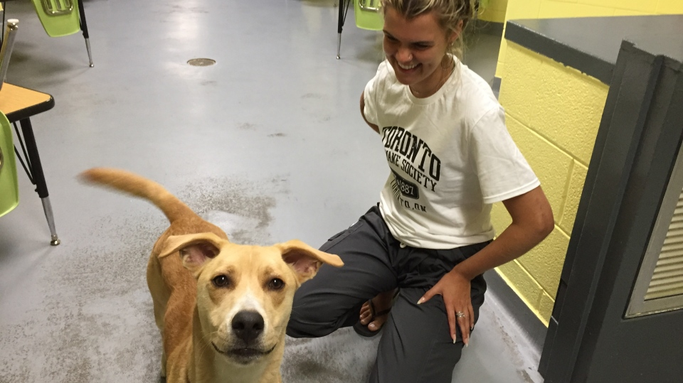 Milo, the dog stolen from a downtown shelter, has been safely returned on Sunday. (Ricardo Alfonso)