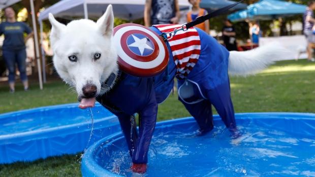 Doggy Con 1