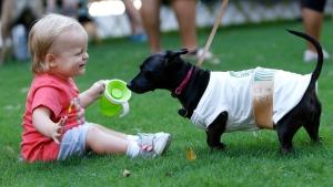 Doggy Con 2