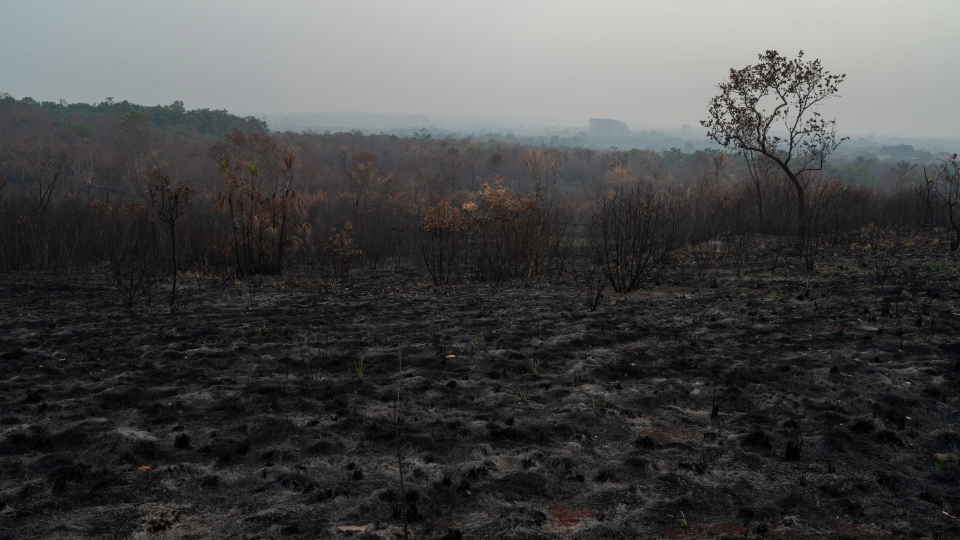A scorched field is seen in Altamira, Para state, Brazil, Saturday, Aug. 24, 2019. Brazil's President Jair Bolsonaro has tried to temper global concern over the fires, saying previously deforested areas had burned and that intact rainforest was spared. (AP Photo/Leo Correa)