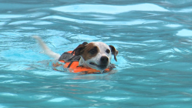 Going to the dogs? 10 public pools hosted dog swim before