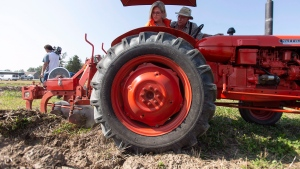 Ontario NDP leader Andrea Horwath plows a furrow at the International Plowing Match in Pain Court Ont. Tuesday, September 18, 2018. THE CANADIAN PRESS/ Geoff Robins