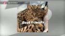 Bieber cats
