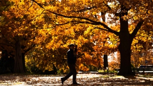 A person is silhouetted as they walk through the fall trees at High Park in Toronto Wednesday November 9, 2016.THE CANADIAN PRESS/Nathan Denette