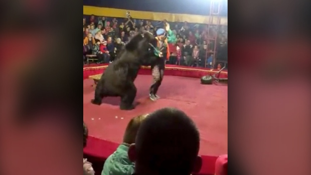 Bear attacks trainer at Russian circus show