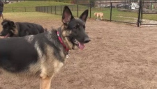 Off leash dog park