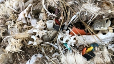 Seabird deaths